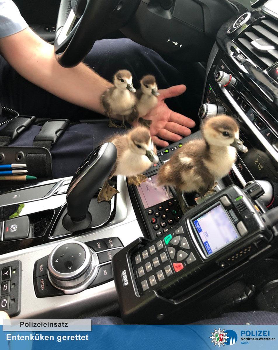 social media geschichte polizei koeln deutschland juni 2020 - Social Media Meldung der Polizei NRW Köln