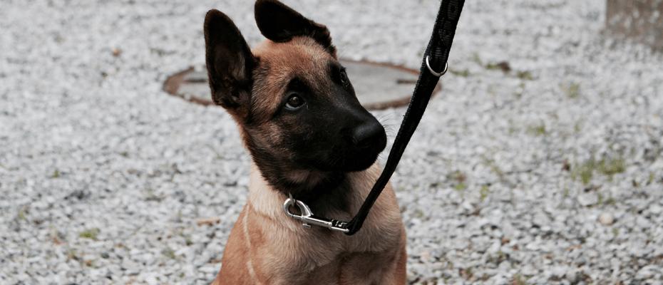 Der neue Blog des Polizei Schäferhund Jasper aus St. Gallen
